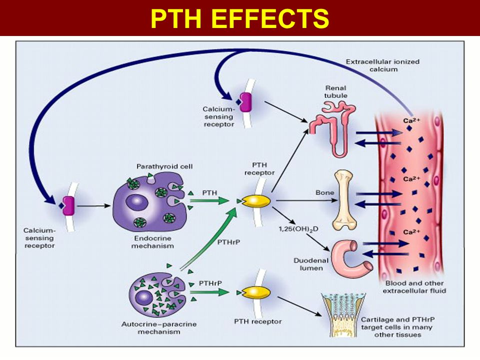 PTH EFFECTS