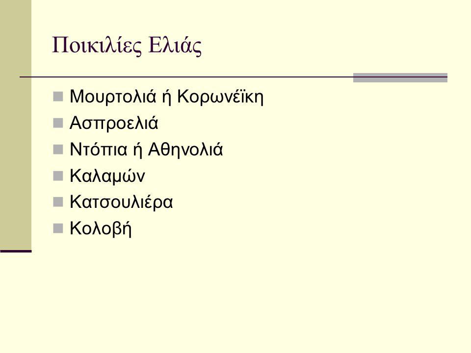 Ποικιλίες Ελιάς Μουρτολιά ή Κορωνέϊκη Ασπροελιά Ντόπια ή Αθηνολιά