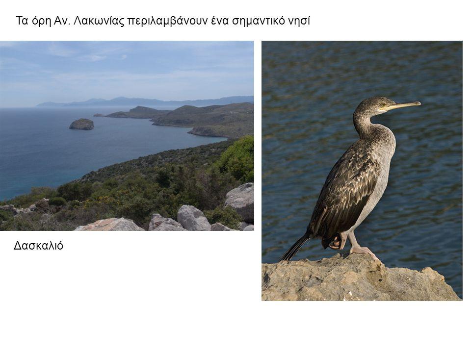 Τα όρη Αν. Λακωνίας περιλαμβάνουν ένα σημαντικό νησί