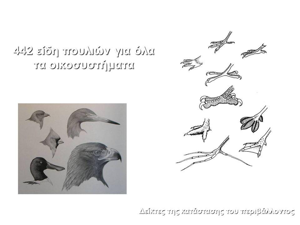 442 είδη πουλιών για όλα τα οικοσυστήματα