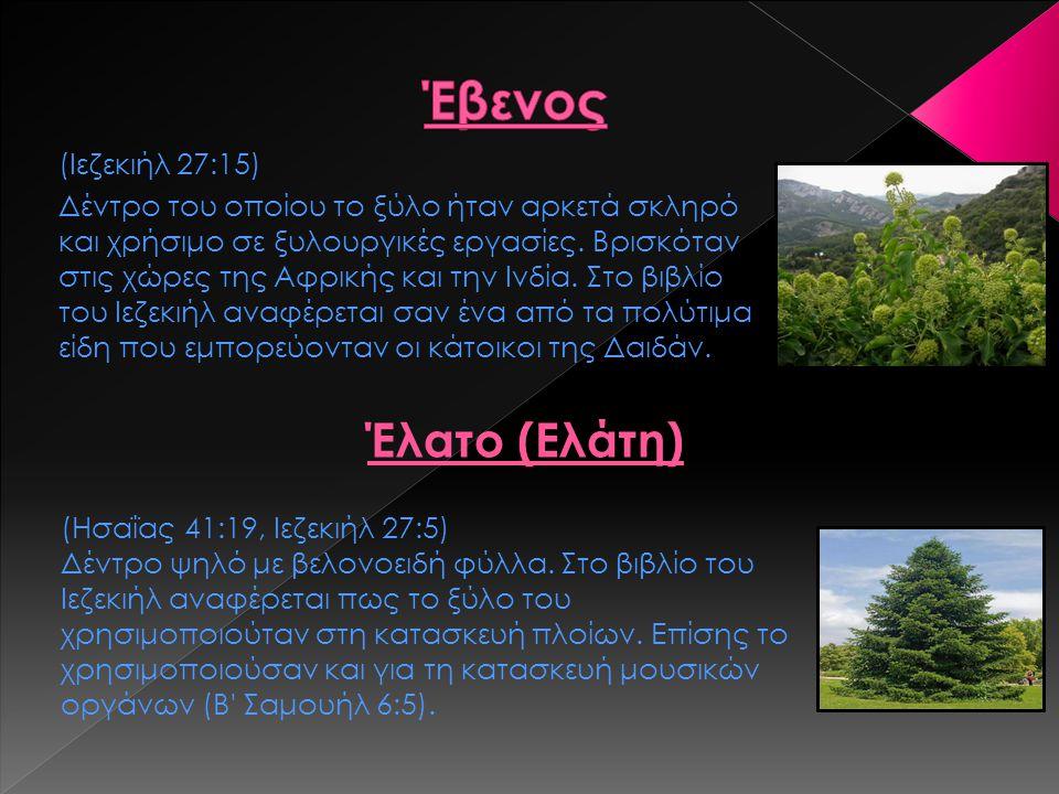 Έβενος Έλατο (Ελάτη) (Ιεζεκιήλ 27:15)