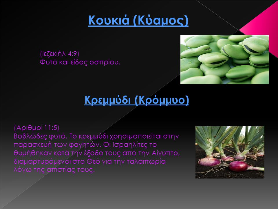 Κουκιά (Κύαμος) Κρεμμύδι (Κρόμμυο) (Ιεζεκιήλ 4:9)