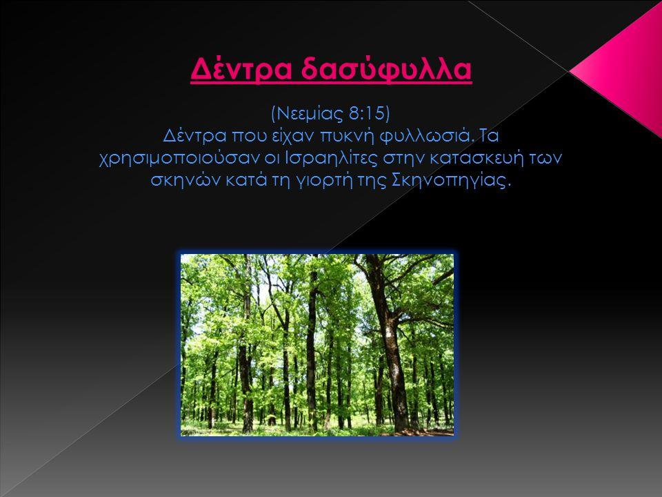 Δέντρα δασύφυλλα (Νεεμίας 8:15)