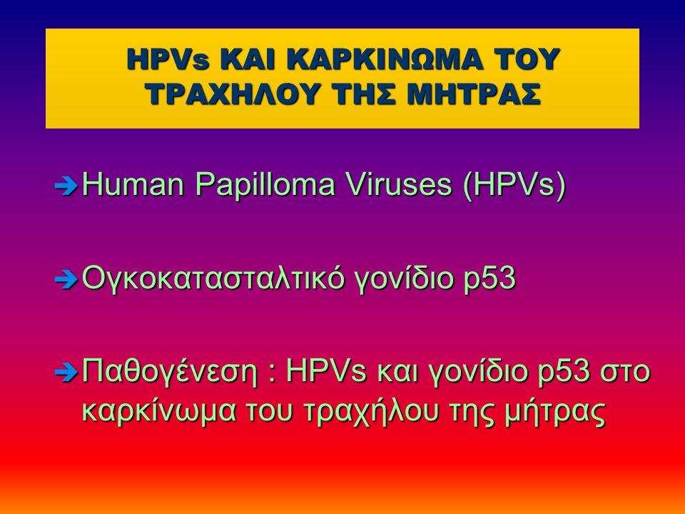 HPVs KAI ΚΑΡΚΙΝΩΜΑ ΤΟΥ ΤΡΑΧΗΛΟΥ ΤΗΣ ΜΗΤΡΑΣ