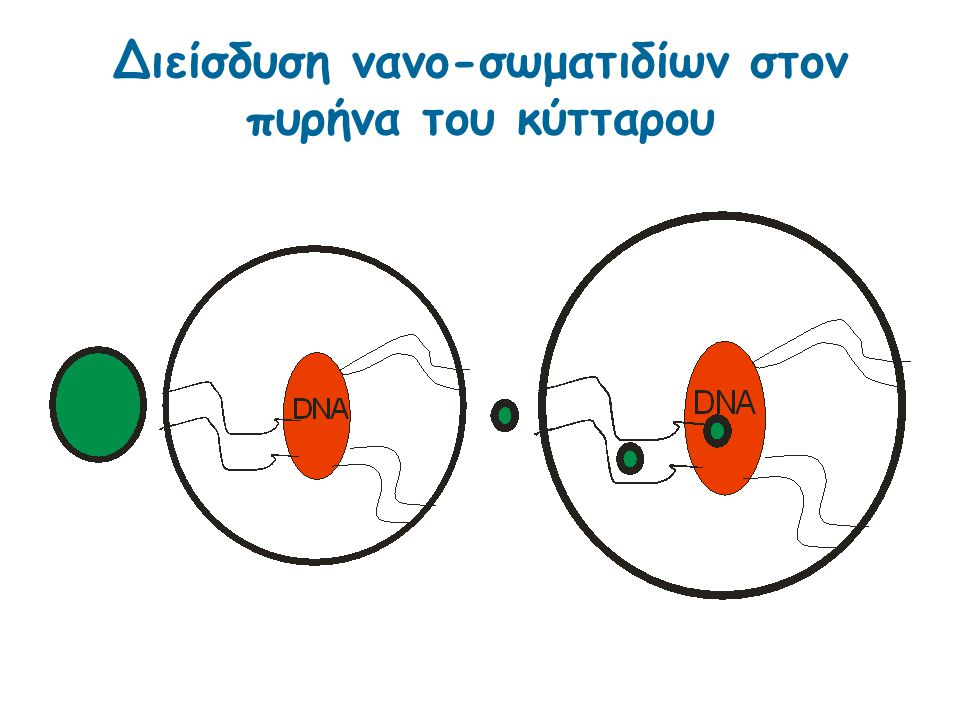 Διείσδυση νανο-σωματιδίων στον πυρήνα του κύτταρου