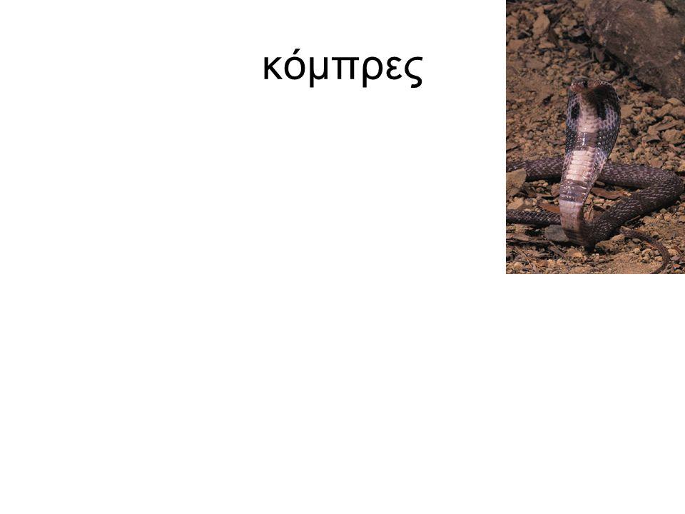 κόμπρες