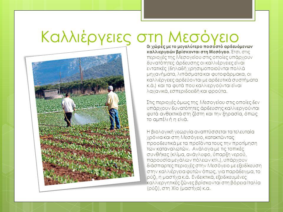 Καλλιέργειες στη Μεσόγειο