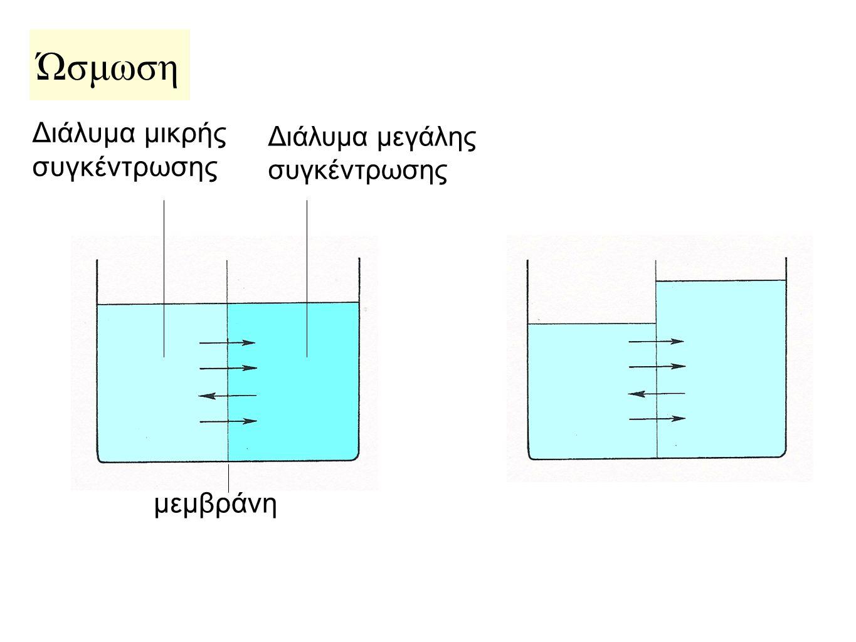 Ώσμωση Διάλυμα μικρής συγκέντρωσης μεμβράνη
