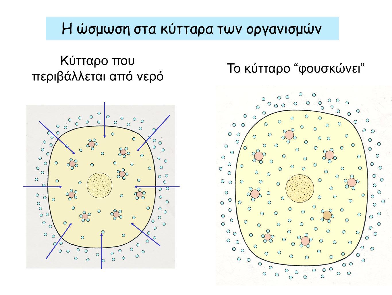 Η ώσμωση στα κύτταρα των οργανισμών