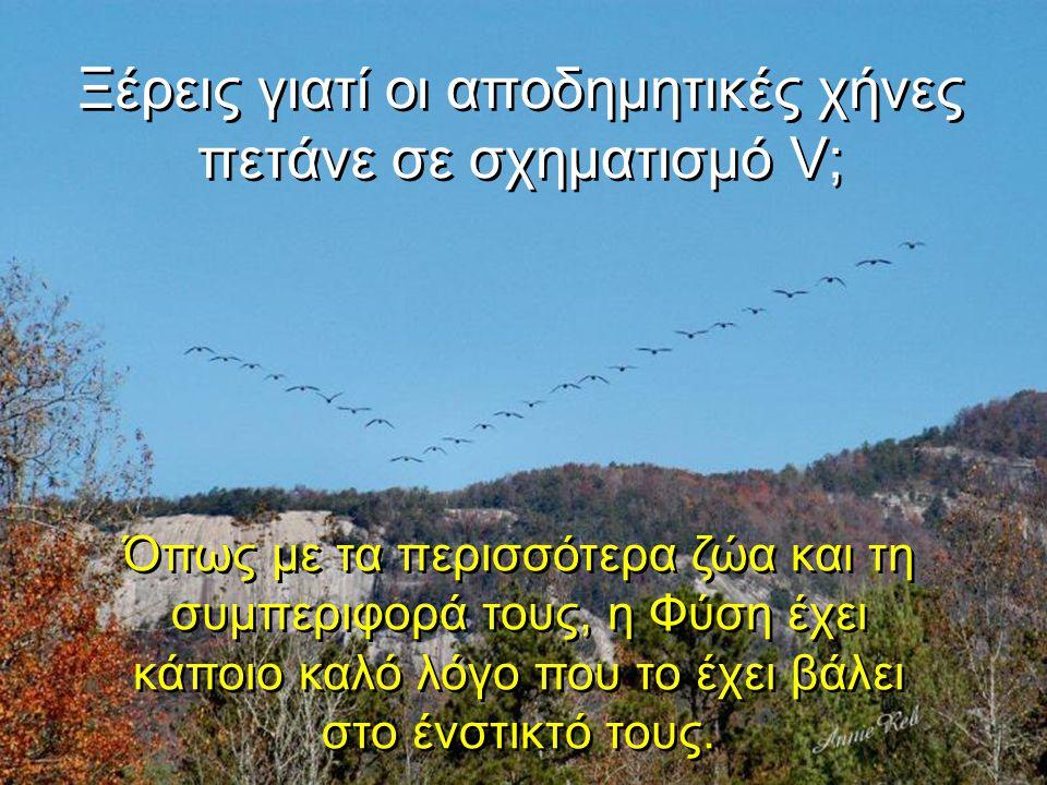 Ξέρεις γιατί οι αποδημητικές χήνες πετάνε σε σχηματισμό V;