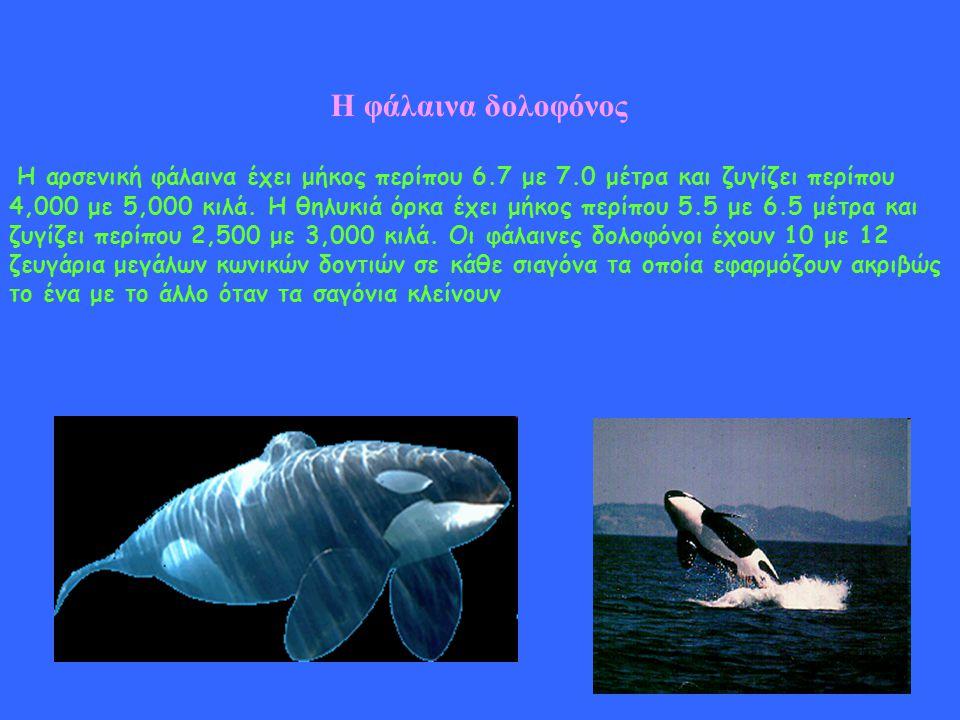 Η φάλαινα δολοφόνος