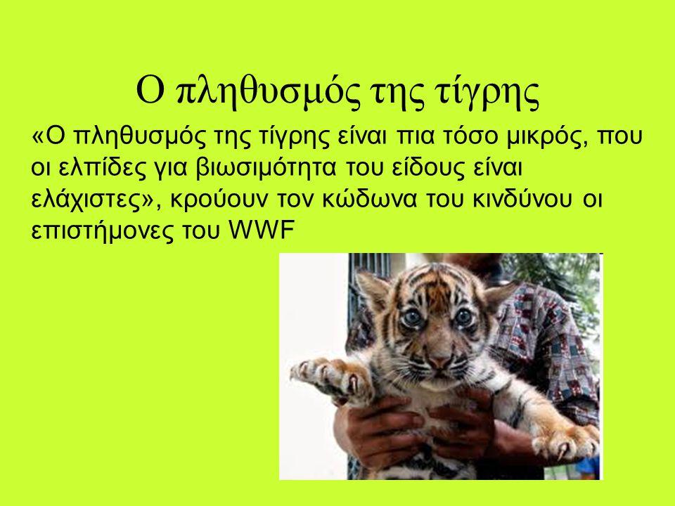 Ο πληθυσμός της τίγρης