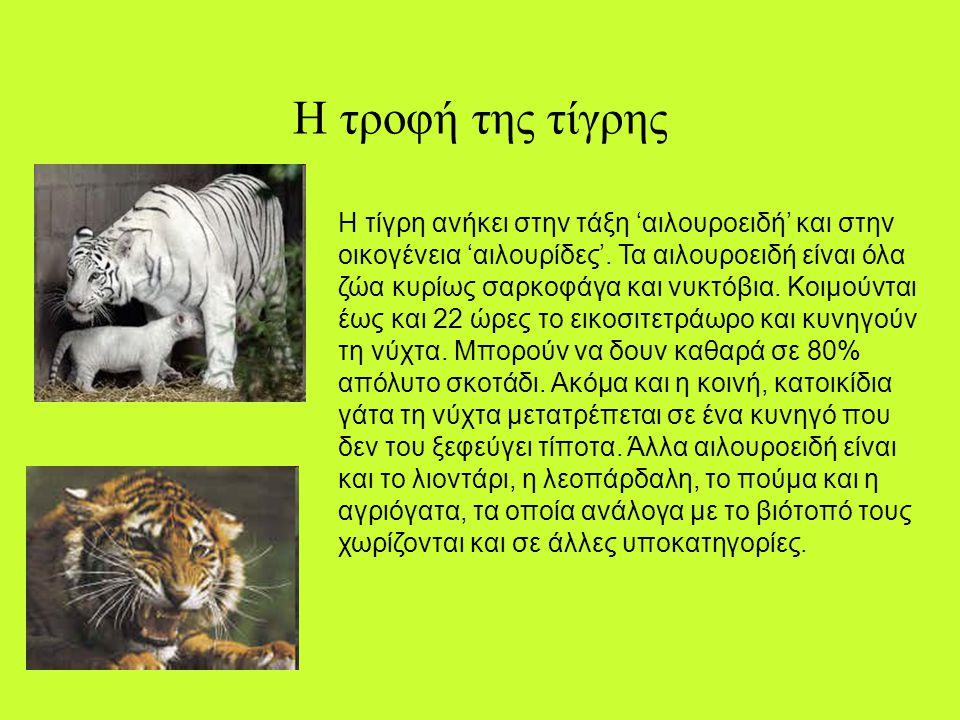 Η τροφή της τίγρης