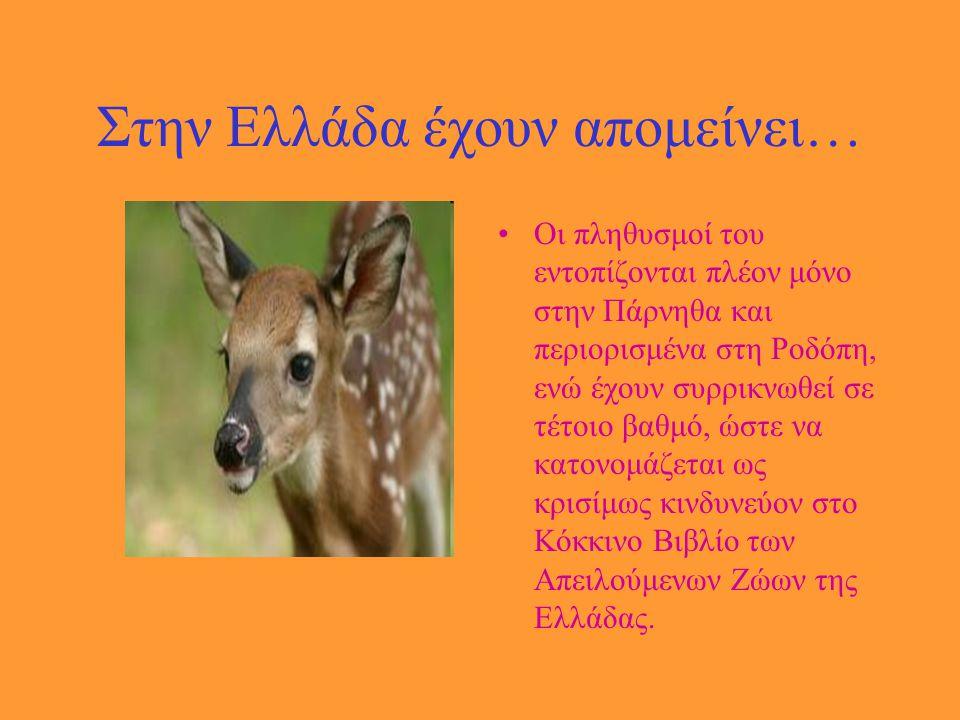 Στην Ελλάδα έχουν απομείνει…