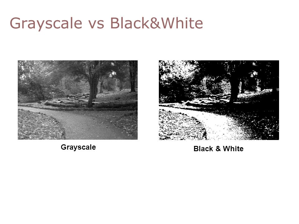 Grayscale vs Black&White