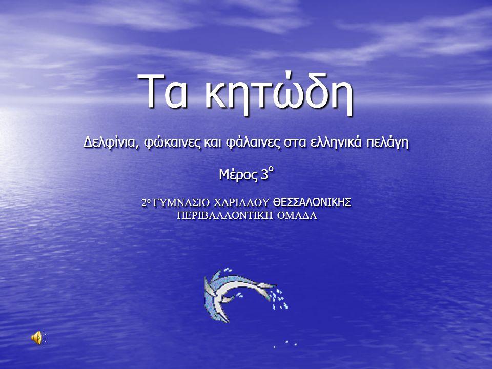 Τα κητώδη Δελφίνια, φώκαινες και φάλαινες στα ελληνικά πελάγη Μέρος 3ο