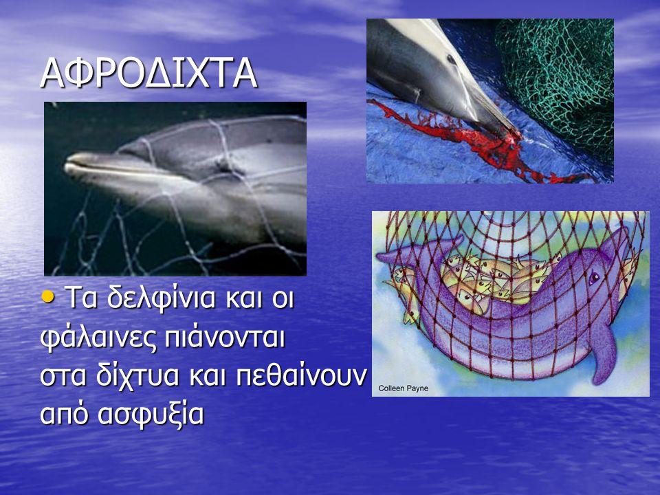 ΑΦΡΟΔΙΧΤΑ Τα δελφίνια και οι φάλαινες πιάνονται
