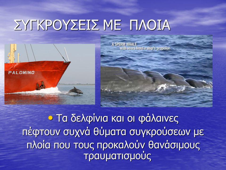 ΣΥΓΚΡΟΥΣΕΙΣ ΜΕ ΠΛΟΙΑ Τα δελφίνια και οι φάλαινες