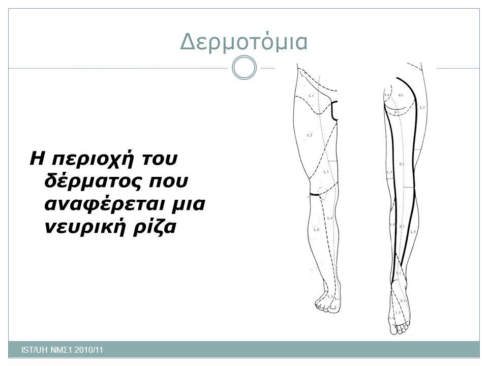 Δερμοτόμια Η περιοχή του δέρματος που αναφέρεται μια νευρική ρίζα