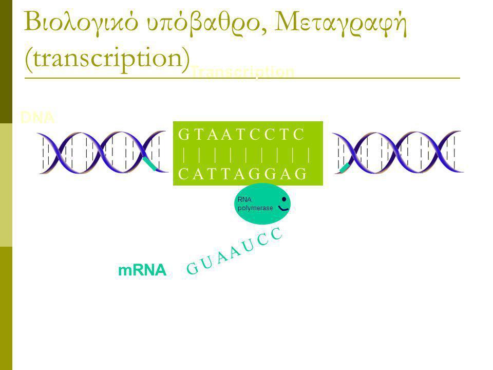 Βιολογικό υπόβαθρο, Μεταγραφή (transcription)