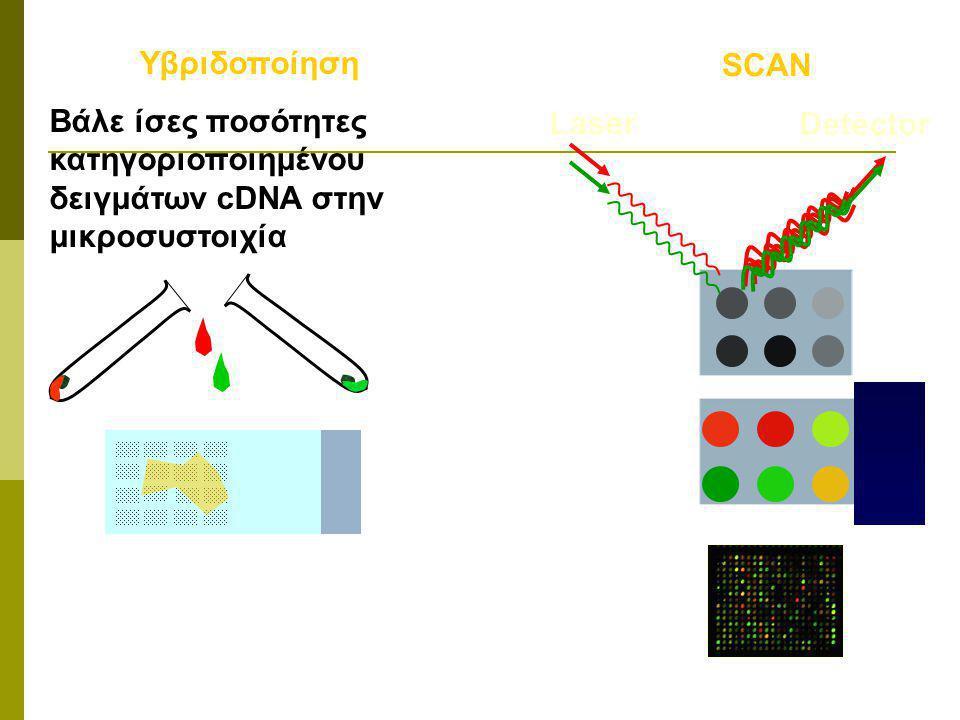 Υβριδοποίηση Βάλε ίσες ποσότητες κατηγοριοποιημένου δειγμάτων cDNA στην μικροσυστοιχία. SCAN. Laser.