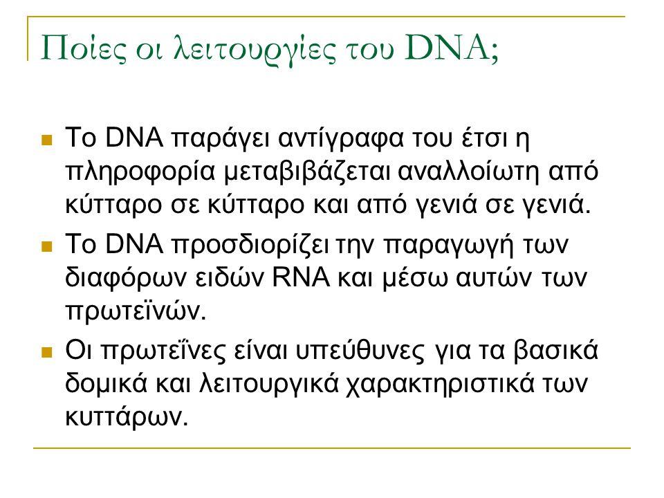 Ποίες οι λειτουργίες του DNA;