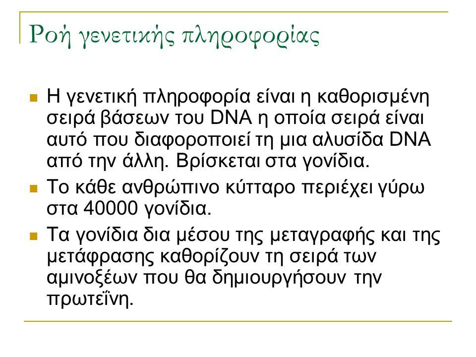 Ροή γενετικής πληροφορίας