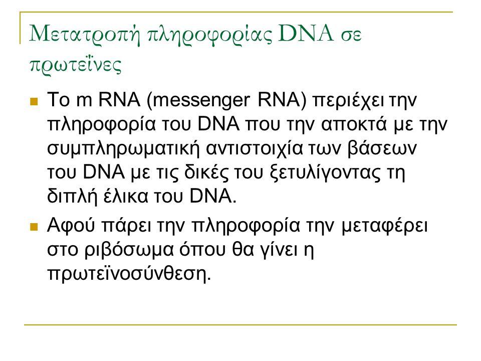Μετατροπή πληροφορίας DNA σε πρωτεΐνες