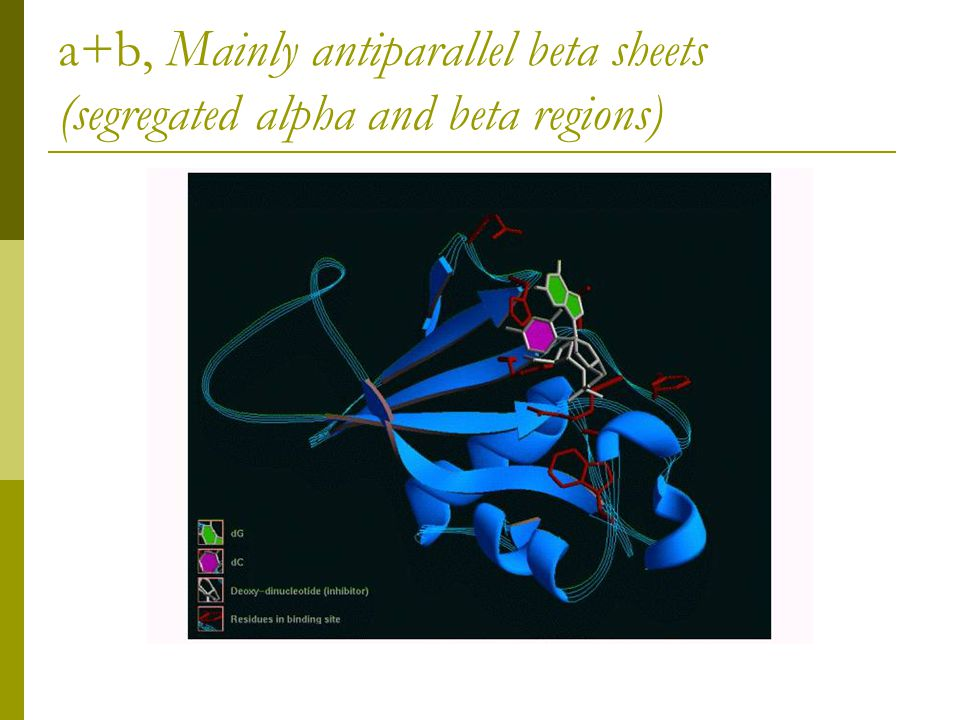 a+b, Mainly antiparallel beta sheets (segregated alpha and beta regions)