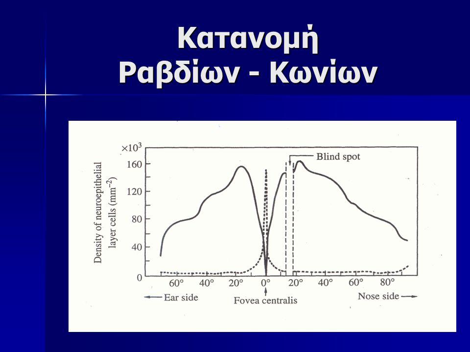 Κατανομή Ραβδίων - Κωνίων