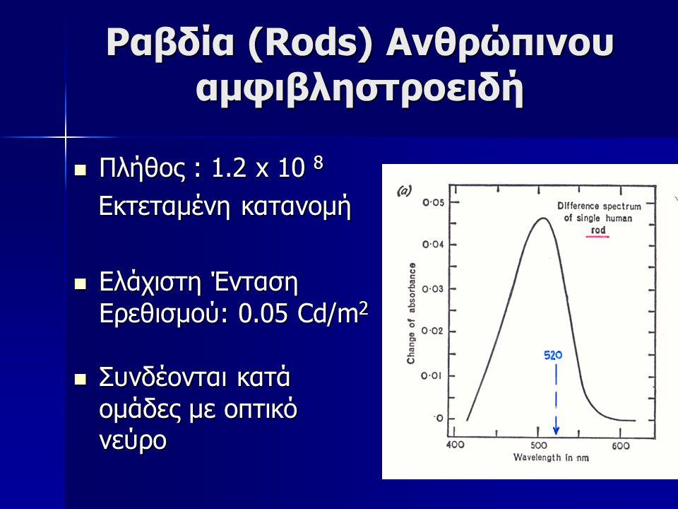 Ραβδία (Rods) Ανθρώπινου αμφιβληστροειδή