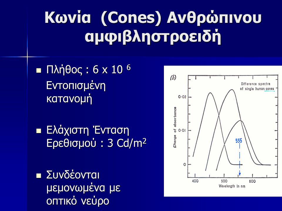Κωνία (Cones) Ανθρώπινου αμφιβληστροειδή