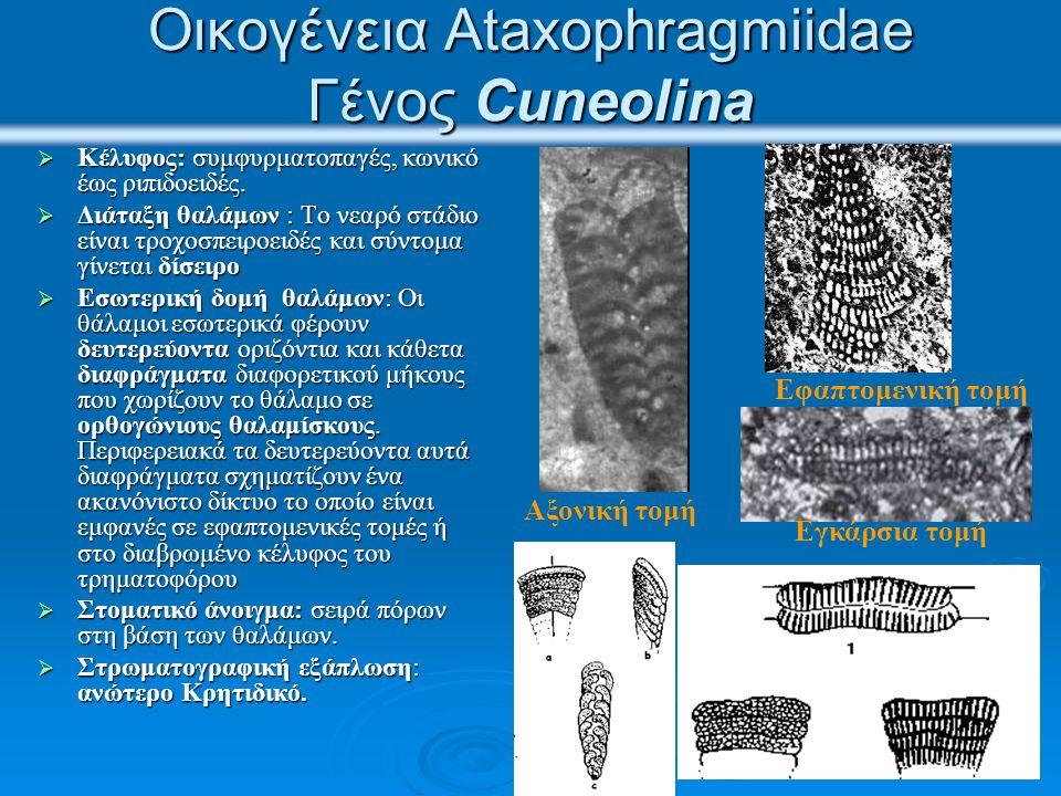Οικογένεια Ataxophragmiidae Γένος Cuneolina