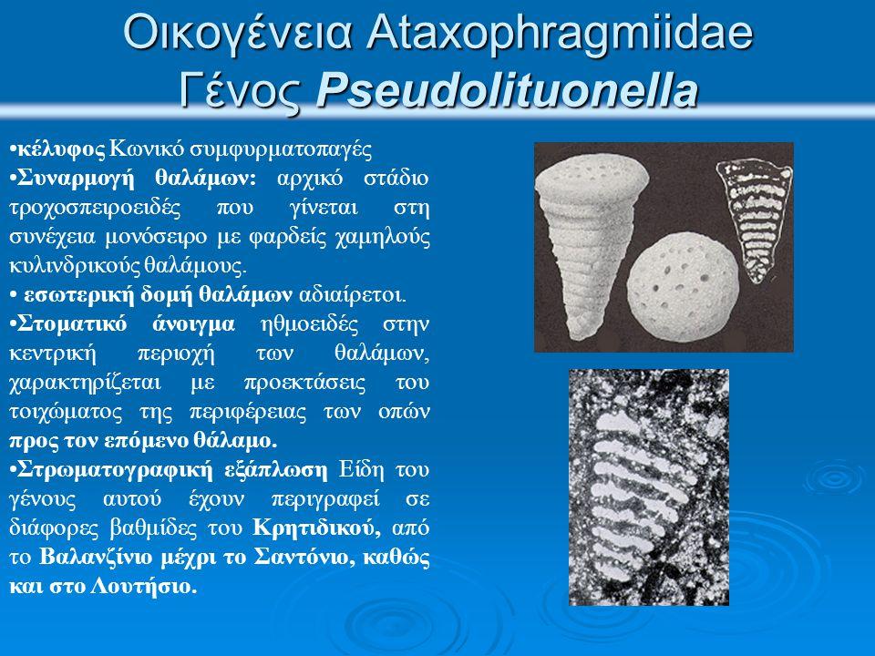 Οικογένεια Ataxophragmiidae Γένος Pseudolituonella