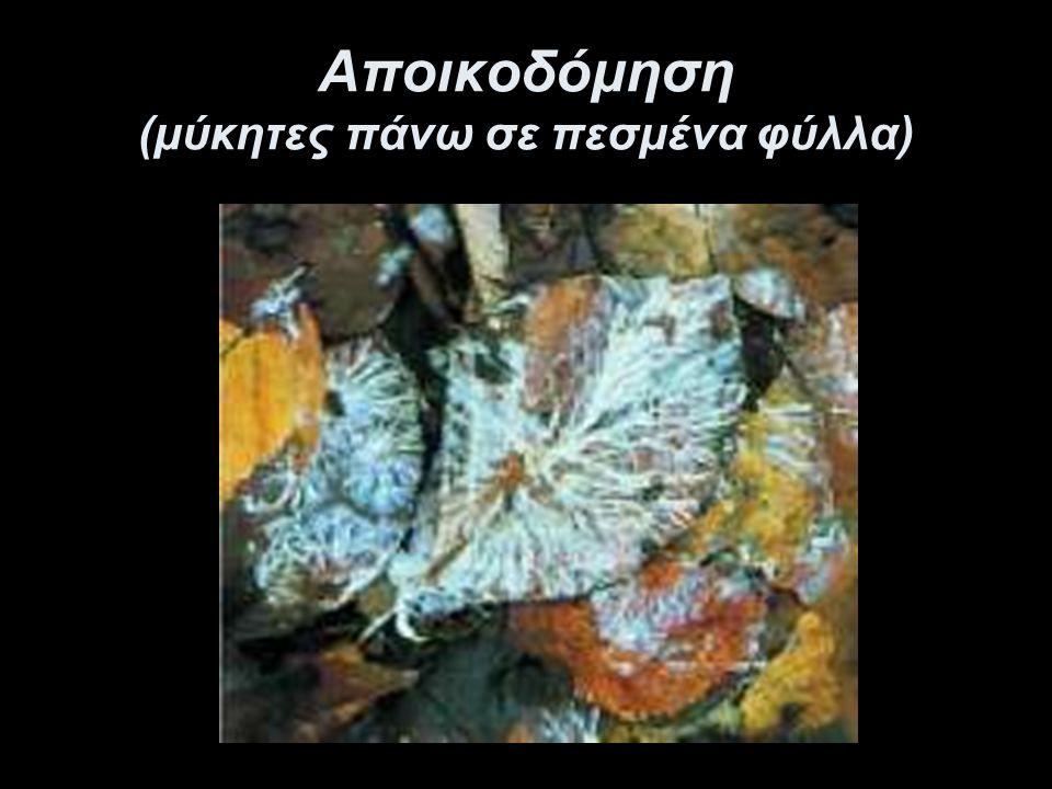 Αποικοδόμηση (μύκητες πάνω σε πεσμένα φύλλα)