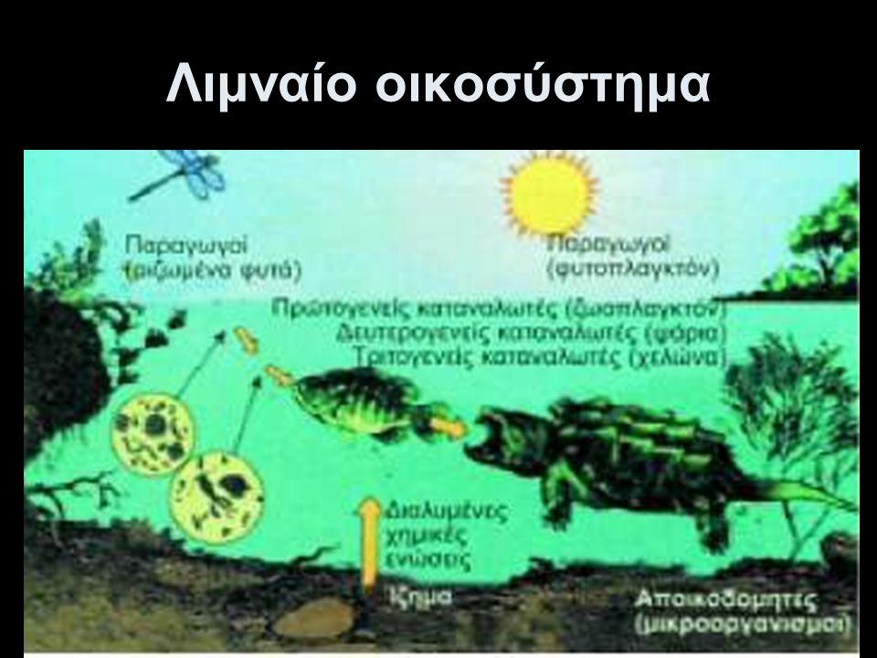 Λιμναίο οικοσύστημα