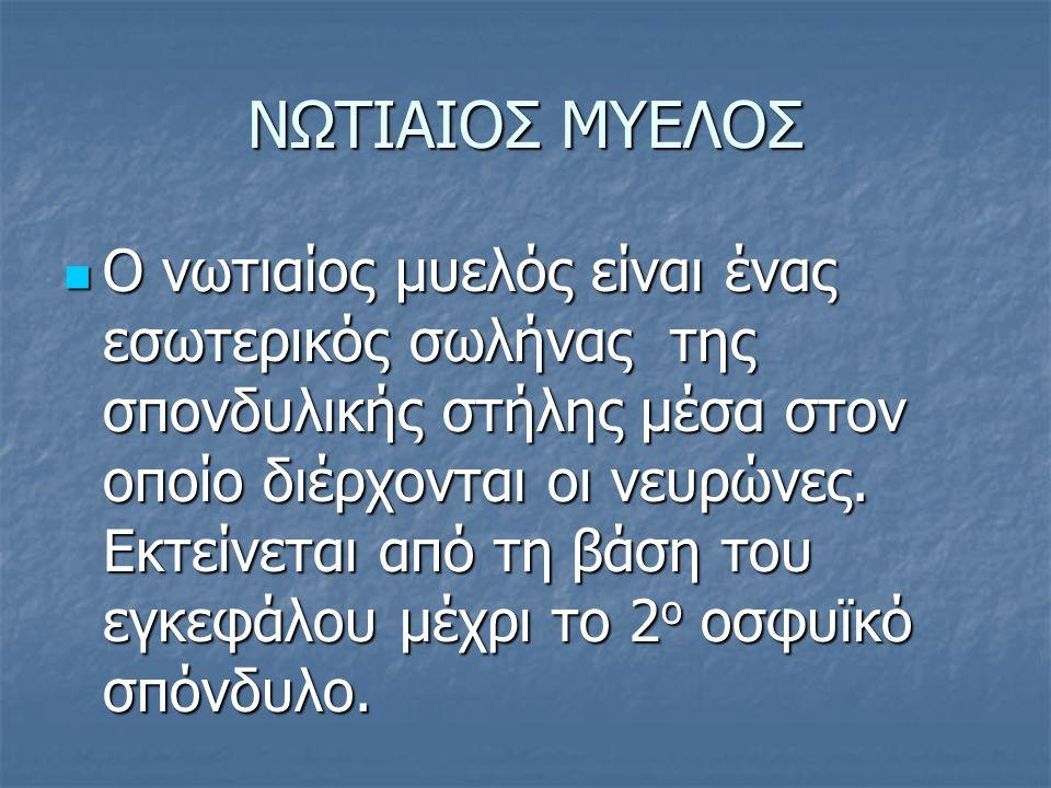 ΝΩΤΙΑΙΟΣ ΜΥΕΛΟΣ