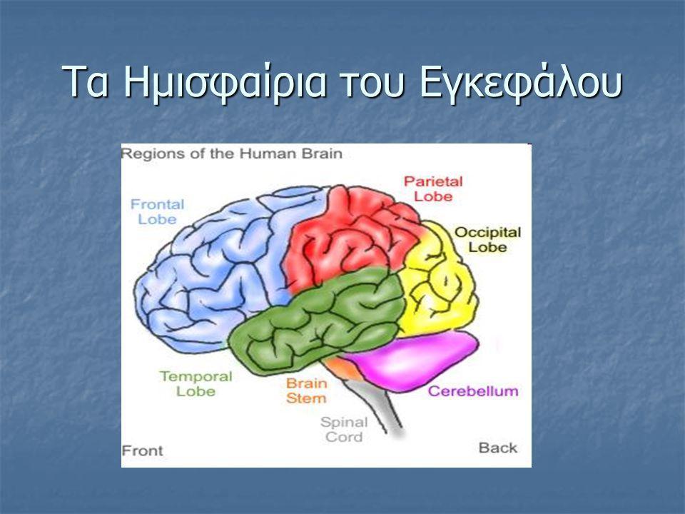 Τα Ημισφαίρια του Εγκεφάλου