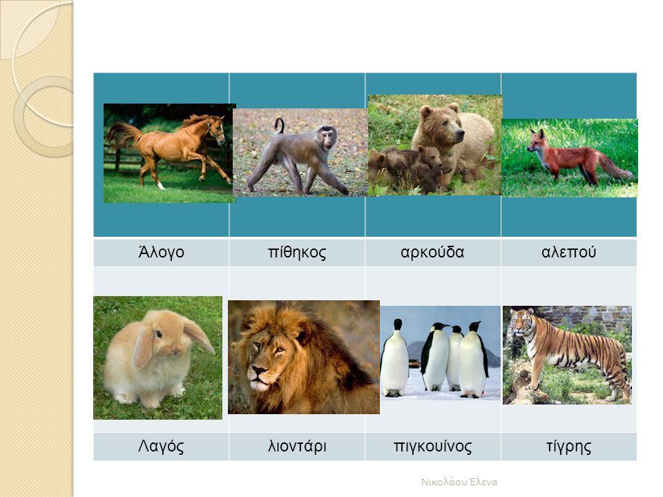 Άλογο πίθηκος αρκούδα αλεπού Λαγός λιοντάρι πιγκουίνος τίγρης