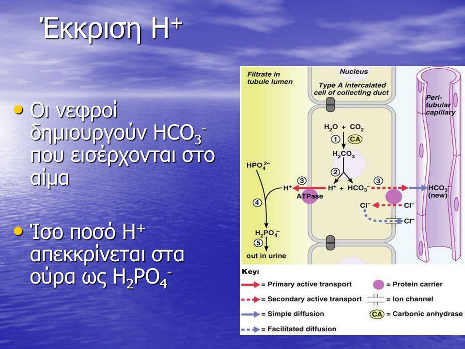 Έκκριση Η+ Οι νεφροί δημιουργούν HCO3- που εισέρχονται στο αίμα