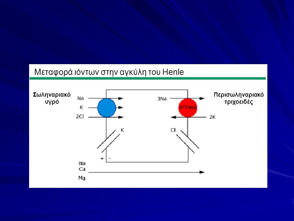 Μεταφορά ιόντων στην αγκύλη του Henle