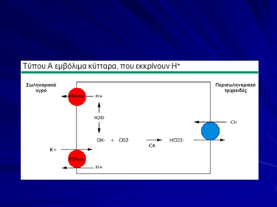 Τύπου Α εμβόλιμα κύτταρα, που εκκρίνουν H+