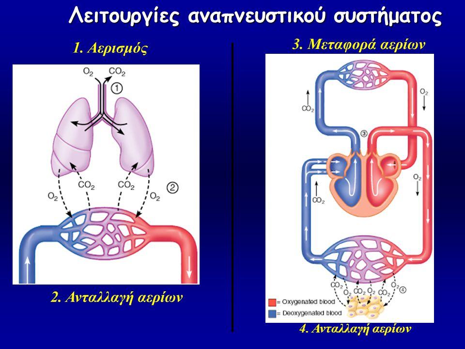 Λειτουργίες αναπνευστικού συστήματος