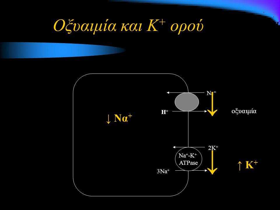↓ ↓ Οξυαιμία και Κ+ ορού ↓ Να+ ↑ Κ+ οξυαιμία Na+ Η+ 2K+ Na+-K+ ATPase
