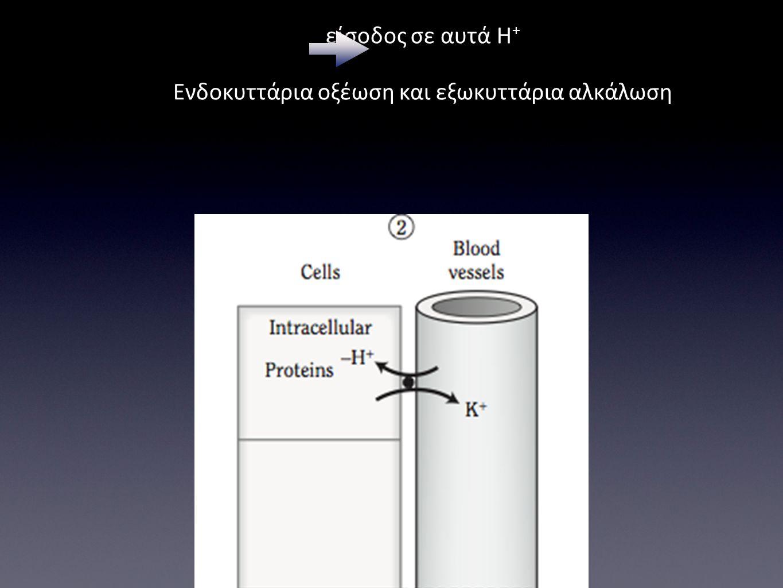 Υποκαλιαιμία έξοδος Κ+ από τα κύτταρα και είσοδος σε αυτά Η+