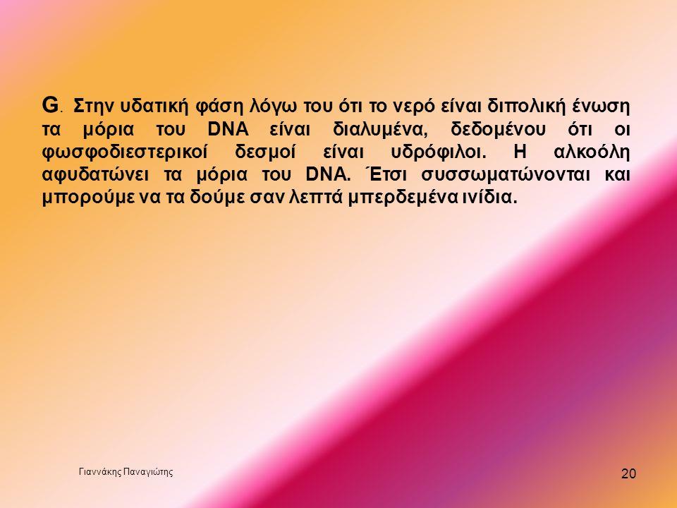 G. Στην υδατική φάση λόγω του ότι το νερό είναι διπολική ένωση τα μόρια του DNA είναι διαλυμένα, δεδομένου ότι οι φωσφοδιεστερικοί δεσμοί είναι υδρόφιλοι. Η αλκοόλη αφυδατώνει τα μόρια του DNA. Έτσι συσσωματώνονται και μπορούμε να τα δούμε σαν λεπτά μπερδεμένα ινίδια.