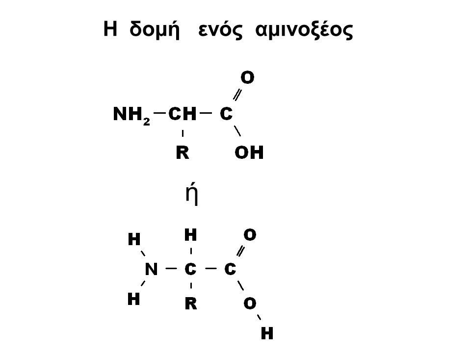 Η δομή ενός αμινοξέος ή