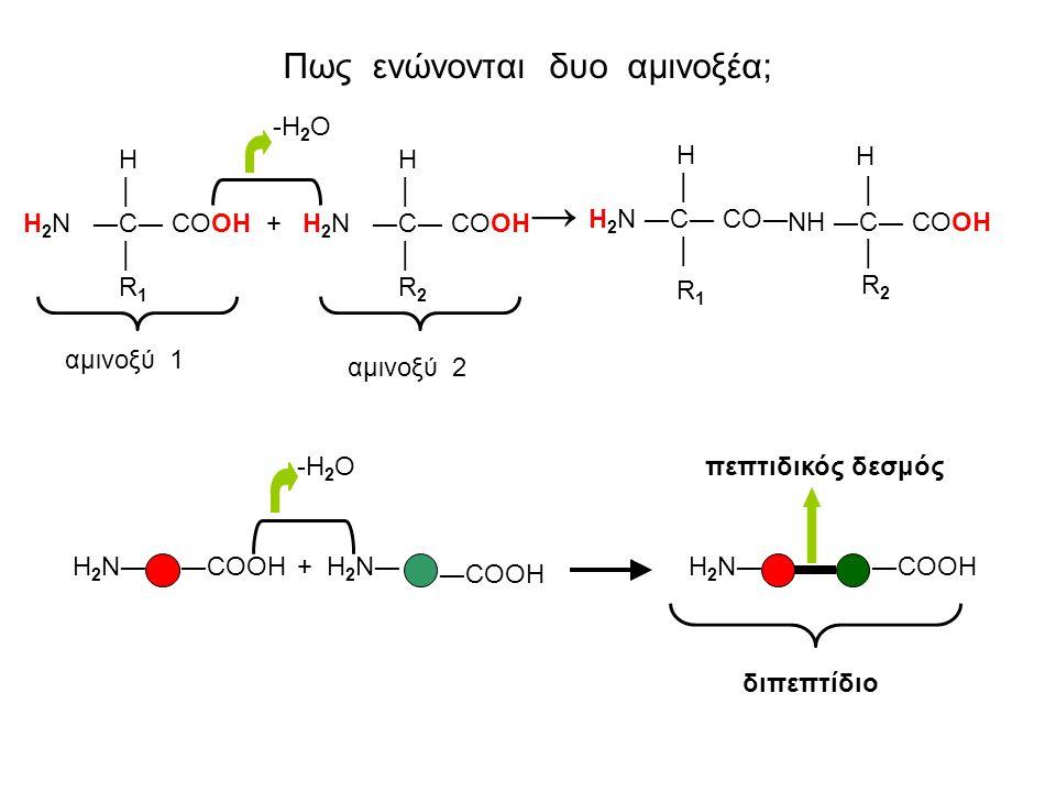 Πως ενώνονται δυο αμινοξέα;