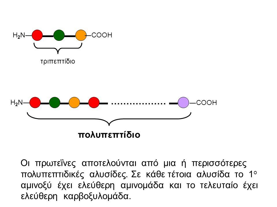 Η2Ν― ―CΟΟΗ. τριπεπτίδιο. Η2Ν― ―CΟΟΗ. ……………… πολυπεπτίδιο.