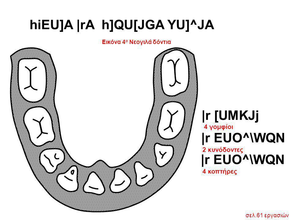 Εικόνα 4α Νεογιλά δόντια